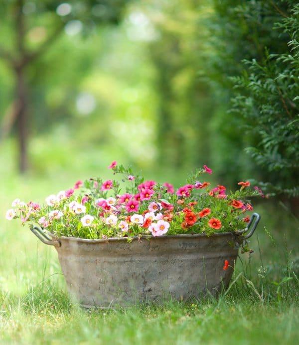 Bepflanzte Zinkwanne im Garten