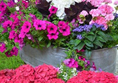 Sommerblumen in der Zinkwanne