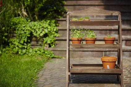 Frische Kräuter auf einer Blumentreppe / Pflanztreppe
